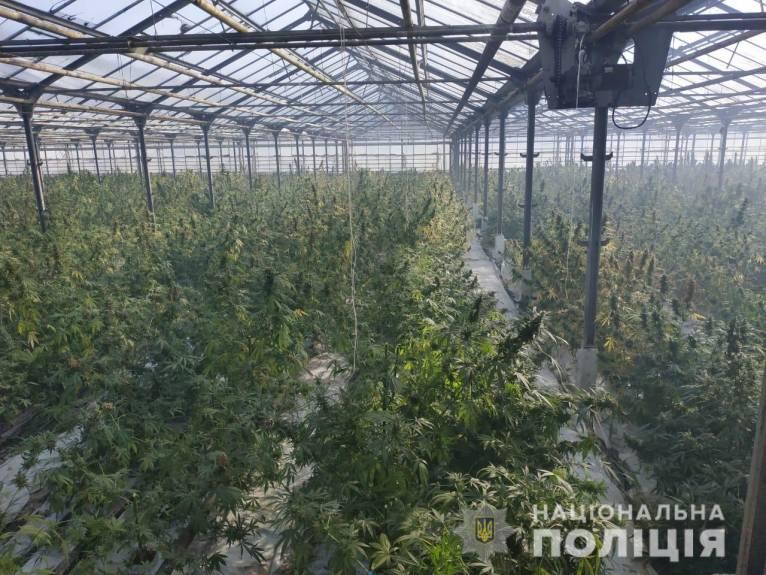 Операція «Мак-2019»: на Прикарпатті виявили рекордну кількість наркосировини на понад 50 мільйонів євро (фото+відео)